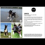 Chained Dog Rehabilitation & Rehoming NZ