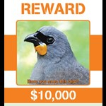 South Island Kokako Charitable Trust